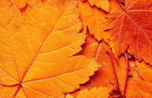 Уход за проблемной кожей осенью. Ежедневный уход за лицом осенью