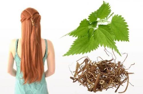 Сухие волосы на кончиках и жирные у корней. Как лечить локоны?