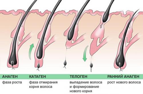 При беременности волосы растут быстрее на голове