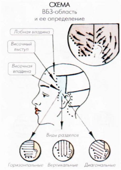 Деление волос на зоны при окрашивании. Деление волос на зоны: азы парикмахерского искусства