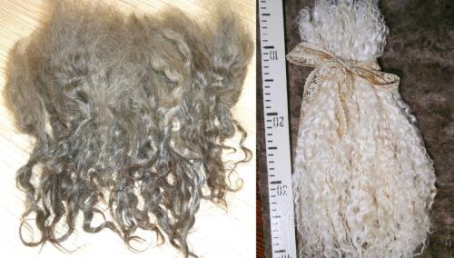 Волосы для кукол. 7. Шерсть коз и лам (мохер, козьи трессы)