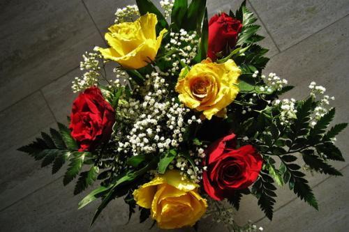 Колористика Наука. Колористика: принципы сочетания цветов