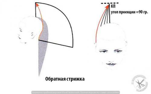 Формы стрижки. Прогрессивные формы стрижек.