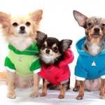 Одежда для собак - причуда или необходимость?